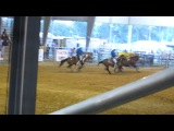 USA, Texas, rodeo, Bareback Riding, 2012...